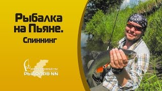 Рыбалка на Пьяне  Ловля голавля на спиннинг.