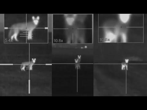 Coyote Hunting at Night   Dirt Naps   XQ50 LRF Kill Shots