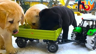 BRUDER Tractor Deutz is carrying on trailer feeding for small puppies.