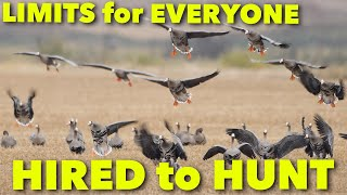 LIMITS for EVERYONE ... Hired to Hunt Season 6: Hunting Limits of Ducks & Geese at Ongaro's.