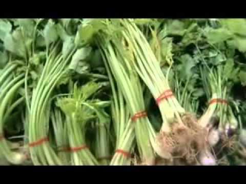 AN 14 ราคาผักสูงขึ้นในช่วงเทศกาลกินเจ