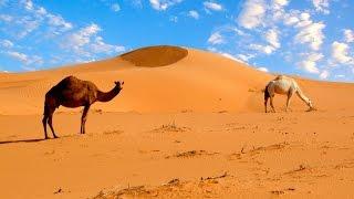 Экскурсия в Сахару, Эль-Джем, Джип -сафари. Тунис. Excursion to the Sahara, El Jem, Jeep -safari.(Музыку Сергея Чекалина к этому видео можно скачать по адресу: http://www.realmusic.ru/sergeychekalin/music/ или http://promodj.com/diamond.serg..., 2015-07-18T15:34:43.000Z)