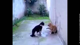 Смешные ролики Самые жесткие драки животных