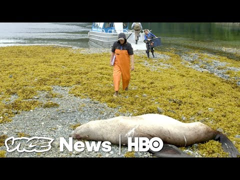 Alaska's Veterinary Pathologists Figure Out Why Animals Die (HBO)