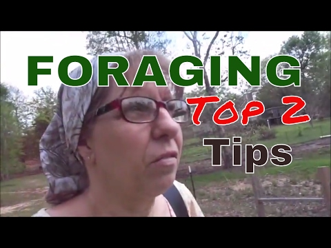Top 2  FORAGING Tips