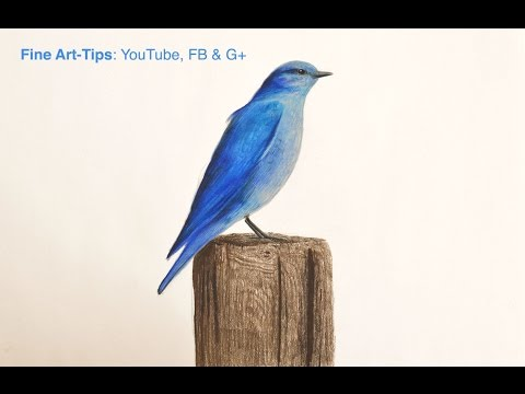 How to Draw a Blue Bird With Color Pencils - The Blue Bird Tale