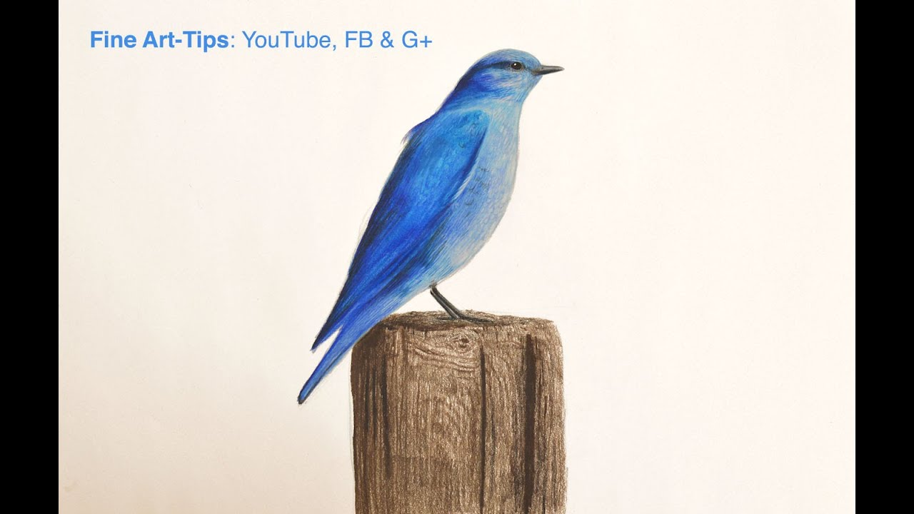 how to draw a blue bird with color pencils the blue bird tale youtube