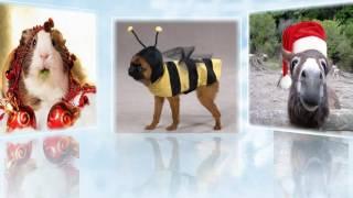 Новогодние костюмы домашних животных Модный приговор по воле хозяев(В #новый_год люди хотят видеть красивыми своих #собак, #кошек и прочих домашних любимцев, поэтому шьются..., 2016-12-20T12:40:55.000Z)