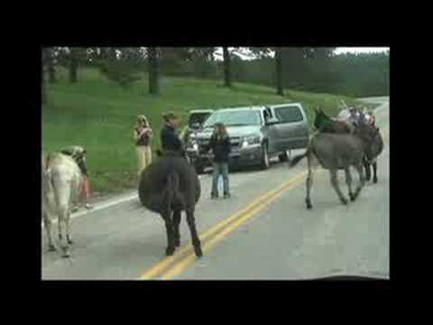 Garage Logic - Rookie's Vacation - Donkeys