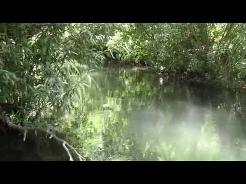 Fly Fishing small waters - A Hidden stream HD