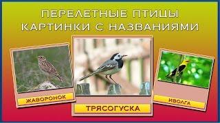Перелетные птицы картинки с названиями