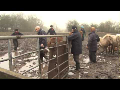 20 Ponies Rescued From A Life Of Misery