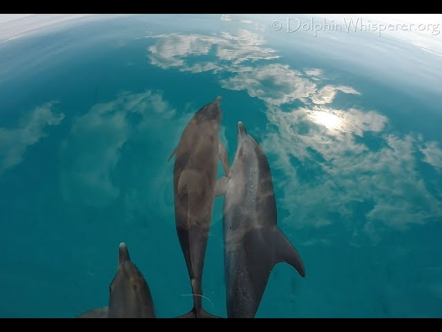 Wild Dolphins floating in the Sky, looking You in the Eye