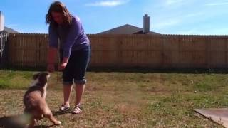 Edraith: Intermediate Trick Dog