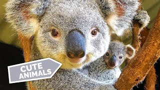 Daily Dose of Animals #7  • Cut Animals Compilation 💙