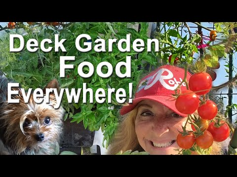 container-garden-tips-vegetable-gardening-on-deck-patio-watermelon-herbs-tomatoes-totes-&-pot-plants