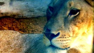 Dubai Zoo Jumeirah (full Coverage, Hd)  حديقة حيوان دبي