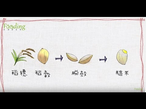 【米】電鍋糙米飯,怎麼煮有訣竅