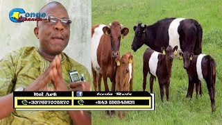 boyoka ba verite ya somo prophete john ngefa abimisi na gouvernement pona ba ngombe
