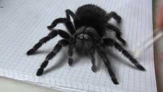 Удивительно реалистичный 3D рисунок(Удивительно нарисованный паук испугал ребенка Реалистичная анаморфная иллюзия., 2015-08-05T20:49:21.000Z)