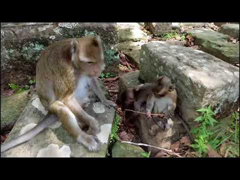 Mum Let's She Go Away Baby Monkey Heavy ST579 Mono Monkey