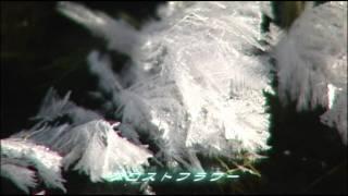 フロストフラワー  frost flower