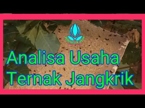 Analisa Budidaya Cabai Untuk Pemula [ Video Tani ]из YouTube · Длительность: 4 мин57 с