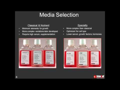 Discover the benefits of specialty media