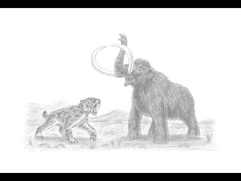 Special Drawing: Smilodon (Saber-Toothed Cat) vs. Mammoth!