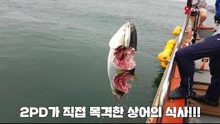 꺄아악~~상어가 나타났다!!!