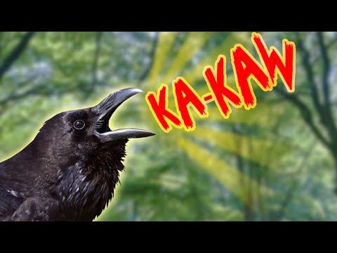 THE KA-KAW INCIDENT! (Gmod Hide & Seek)