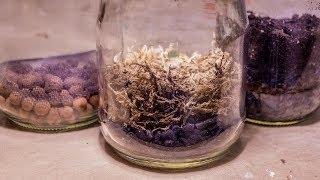 All About Terrarium False Bottoms (Purpose & Methods)