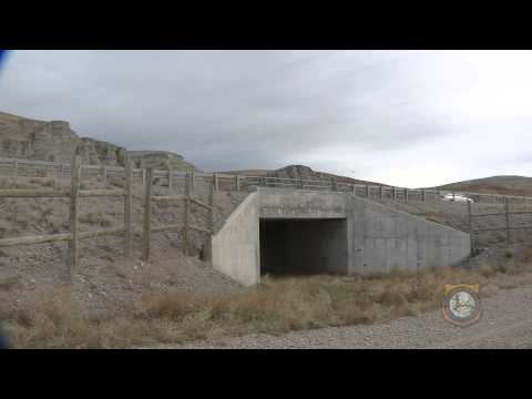 WYDOT Crossing Structures Conserving Wildlife