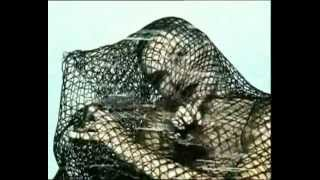 WHIGFIELD - No Tears No Cry [Official Video]