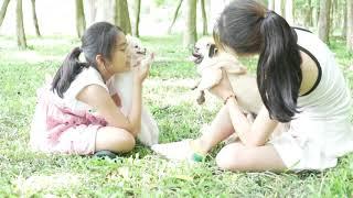 Woww Amazing 2018 Beautiful Girl Playing With Dog Smart & Funny Dog#  3