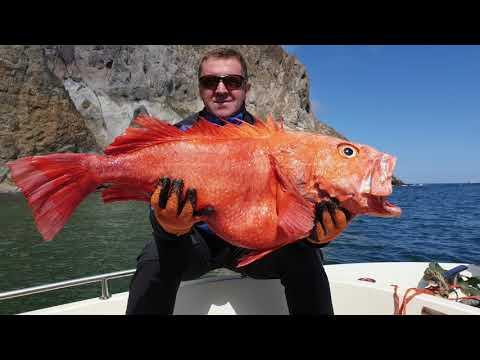 Вопрос: Как ловить глубоководную рыбу?