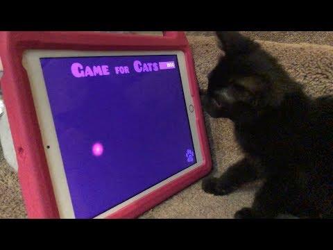 Cute Kitten Playing on Kids iPad   Funny Cats