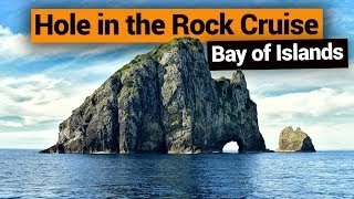 Hole In The Rock Cruise In The Bay Of Islands – New Zealand's Biggest Gap Year – Backpackerguide.nz