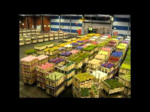 AALSMEER FLOWER MARKET, Holland