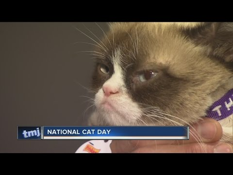 Saturday is National Cat Day!