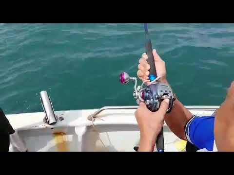 Daiwa Seaborg 200j vs 16kg Stingray a.k.a Ikan Pari Pulau Sembilan