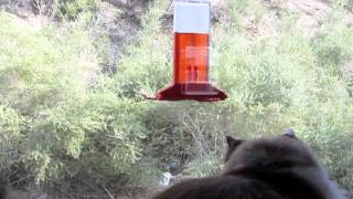 Saki The Cat Loves Her New Birdfeeder
