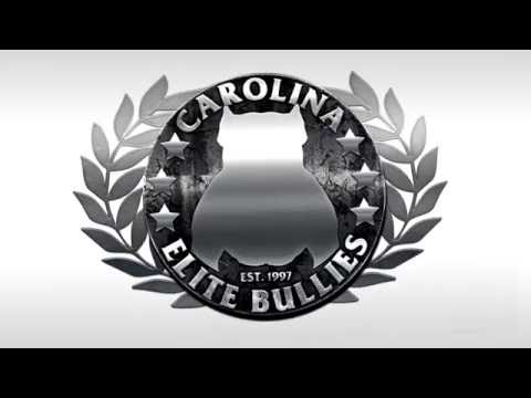 Clean Logo Intro - American Bully, PItbull, Bully Breed
