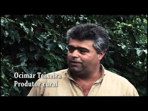 Ocimar Teixeira - Consorciamento de Café com o Estilosantes Campo Grande - Sementes Boi Gordo