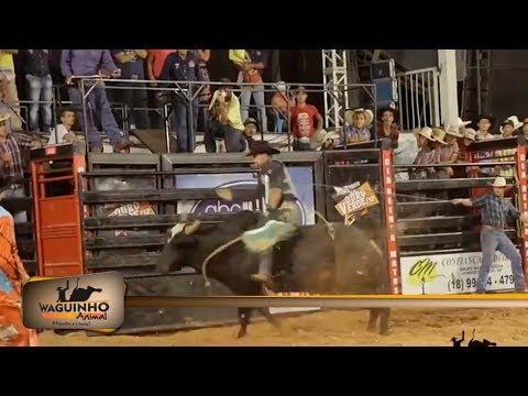 Waguinho Animal - Campeão Touro da Festa do Peão de Ouro Verde 31/03/18