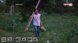 Brigada: Industriya ng niyog sa Laguna, tinalakay sa