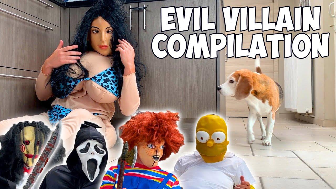 Dogs vs Evil Villain Compilation : Funny Dog Louie The Beagle