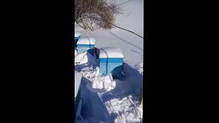 Зимовка в улье с сетчатым дном. Зимовка на улице в улье без дна