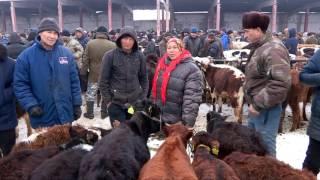 На скотном рынке Шымкента ужесточили правила продажи скота