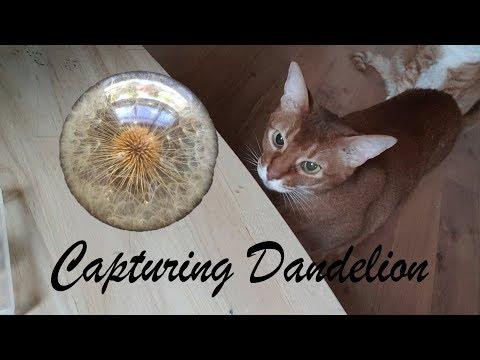 How to Make Dandelion in Resin